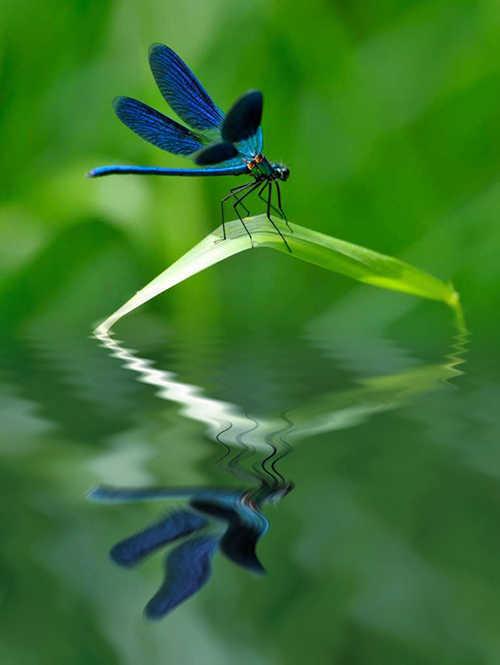 langkah ke dua puluh dua Cara Membuat Refleksi Pada Air Dengan Photoshop