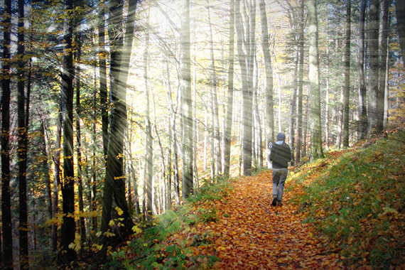 contoh hasil Cara Menambahkan Efek Sinar Matahari Melalui Pohon Dengan Photoshop
